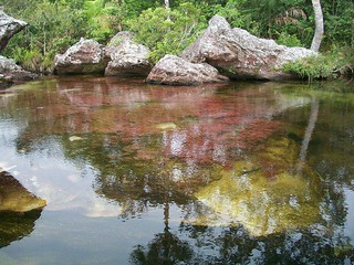 Caño Cristales | by The Colombian Way