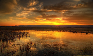 Pond at Sunset | by Tom Lussier Photography