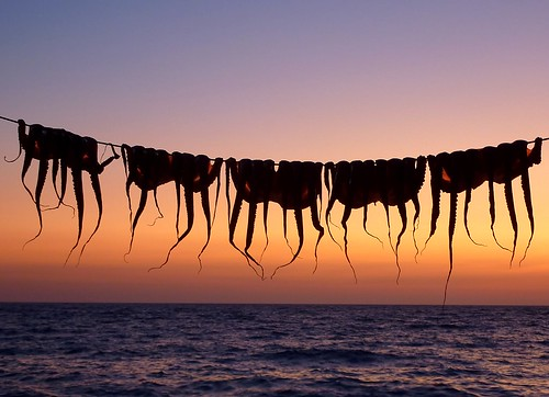 Drying Octopus. Tomorrow's dinner | by Frans.Sellies