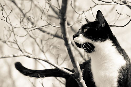Snickers in tree b&w | by loco's photos