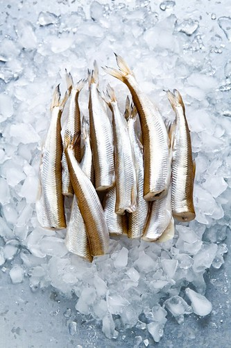 Smelts | by tartelette