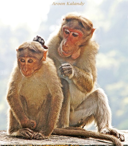 Monkey Buisness | by aroon_kalandy