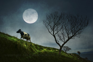 Dancing With the Moonlit Cow | by RonnieLMills