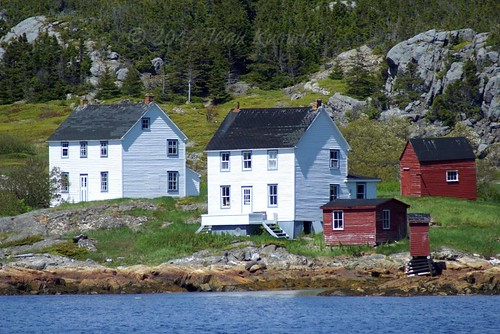 Newfoundland houses | by Jean Knowles