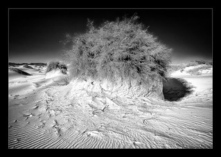 White Sands National Monument | by bugeyed_G