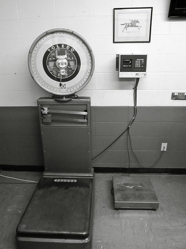 Scales To Weigh Dog Food