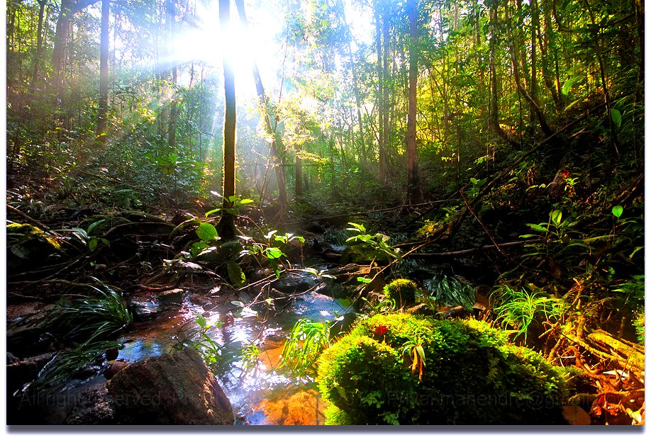 Image result for forest with sun and rain