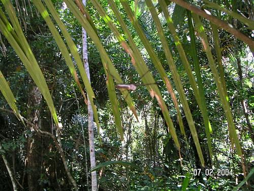 Lakes At Palm Beach Apartments Palm Beach Gardens Fl