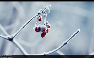 Winter Desktop | by ƒernald
