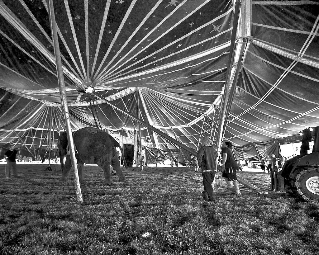 ... Traveling Circus Tent Raising | by Paul Meriweather Photography : black and white circus tent - memphite.com