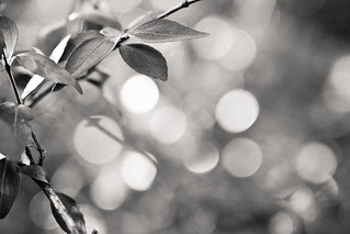 week four: bokeh (black and white) | by carrie-ann-nelson