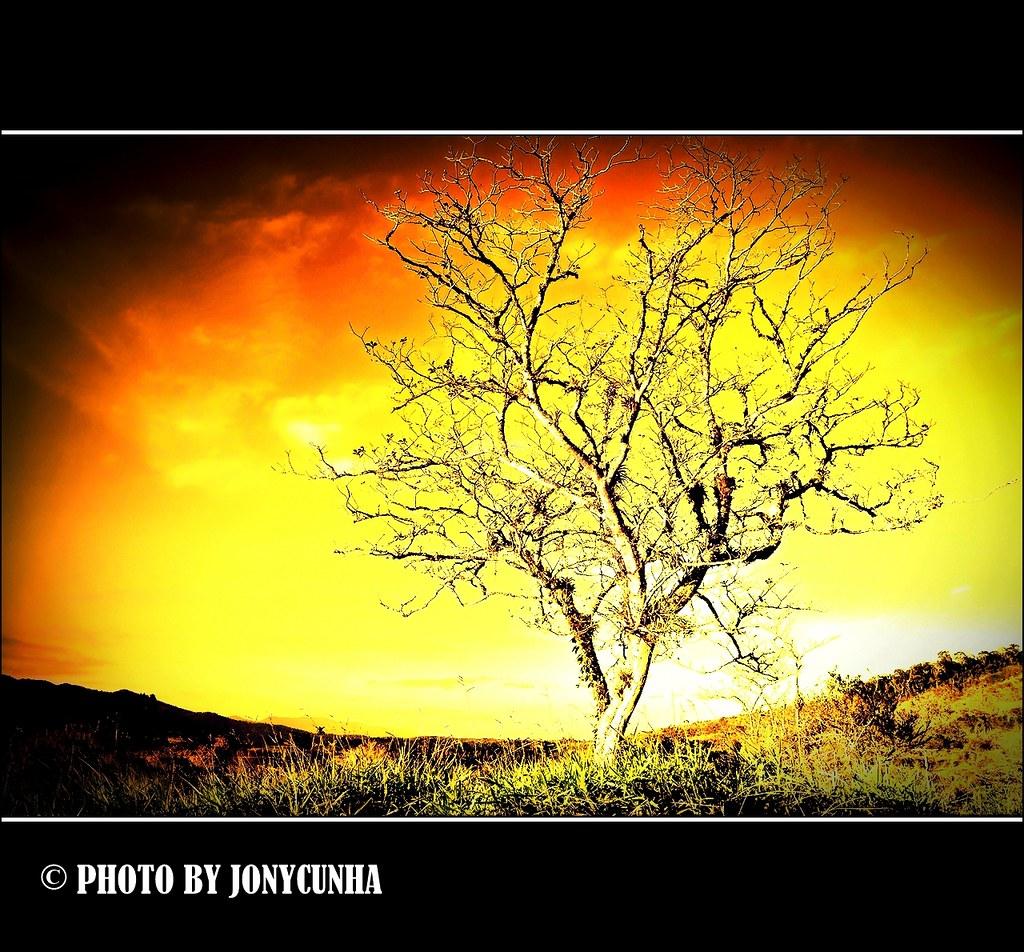 a Árvore da vida the tree of life se adÃo e eva não tive flickr