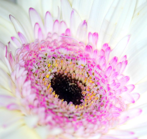 Gerbera Up Close and Personal | by ~Jeannine~