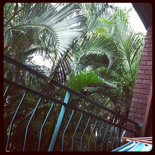 Lying in the hammock in a LOUD thunderstorm with palms waving madly to amuse toddler /crazyperson | by tahinikill