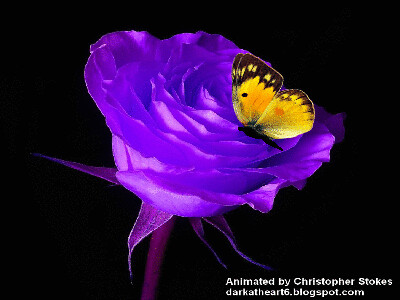 Purple Rose And Butterfly Animator From Chicago Il Visit Flickr