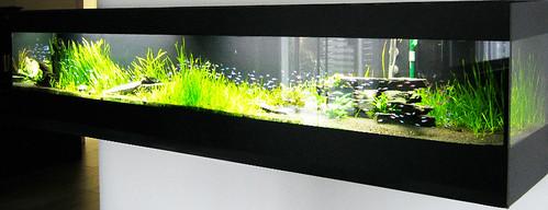 aquarium west becken 10b bei der komplettsanierung im b ro flickr. Black Bedroom Furniture Sets. Home Design Ideas