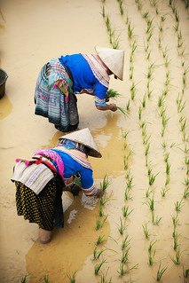 Food and Agriculture: Viet Nam | by United Nations Photo