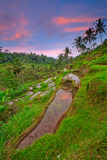 Tegallalang Rice terrace | by ©Helminadia Ranford