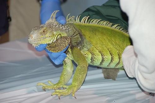 Pet amnesty seaworld 7 florida fish and wildlife flickr for Florida fish and wildlife jobs