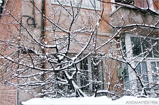 snowy branches | by ANDMAiYESi1986