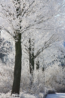 Ice trees | by bessieBES