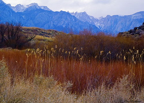 Reeds and Rocks  F4KV2687 | by Ken Hornbrook