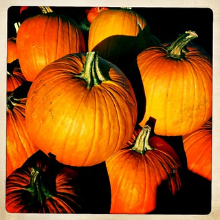 pumpkins | by willphillips76