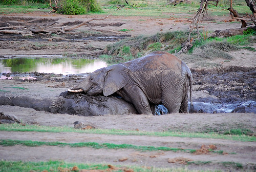 playing in the mud | by heylucy