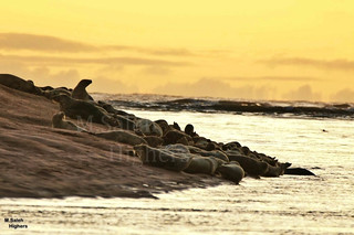 Seals | by Highers,
