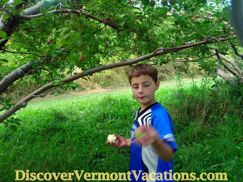 Adam's Orchard | by DiscoverVermontVacations.com