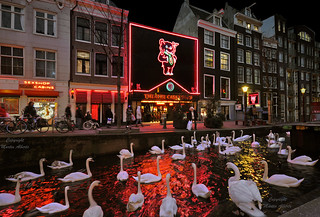 A Swan Lake in Amsterdam ? | by martin alberts Pictures of Amsterdam