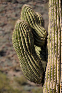 Sonoran Desert National Monument | by rogermajors