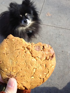 Dog and cookie, again. | by ranjit