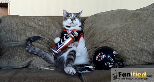 Funny Cat that Drinks Beer and Watches Football | by dwolf81