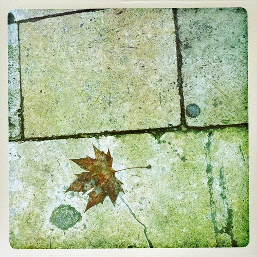 Hipsta leaf. | by Vale Shorts
