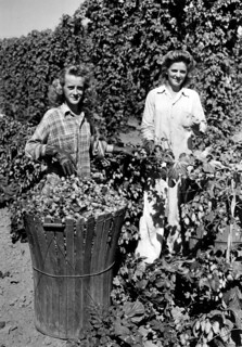 Dorothy and Olgo Brutke picking hops | by OSU Special Collections & Archives : Commons