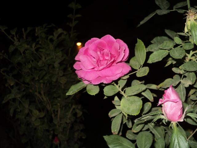 flwor <  deemh suliman  flickr, Beautiful flower