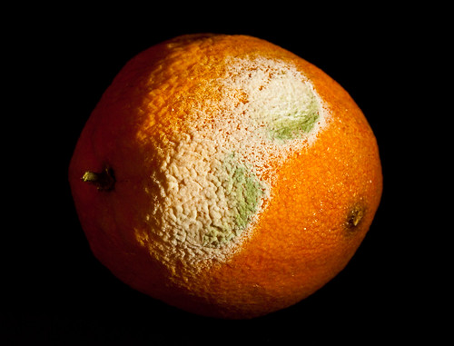 Mouldy orange | by El Tel63, Photographer & Phantom flyer