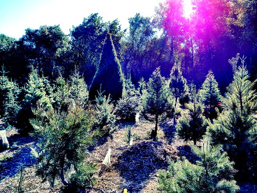 Christmas tree farm | by Lostinawave