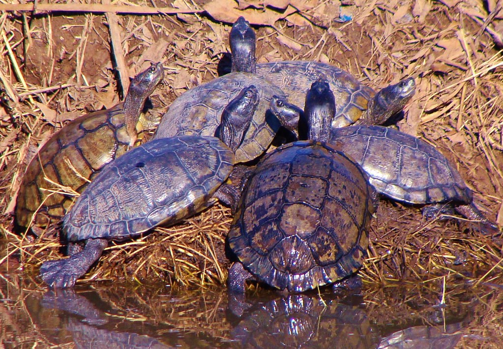 happy new year from texas turtles by spysgrandson thanks for 3000000 views