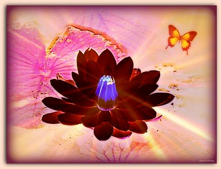 Spirit of the Lotus | by Chris C. Crowley- Always behind but trying to catc