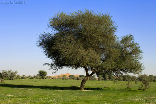 Green Desert - Explore | by TARIQ-M