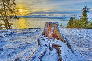 Stump in Winter | by elviskennedy