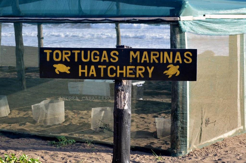 Corral de tortugas marinas, similar al que usan en Quintana Roo