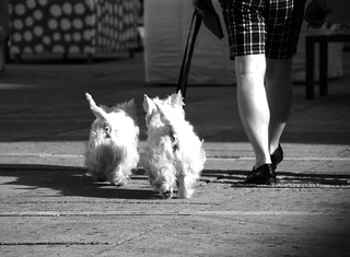 Two Dogs - Two Legs | by CoolMcFlash