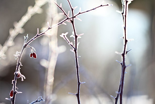 frosty light | by spiralgirl1