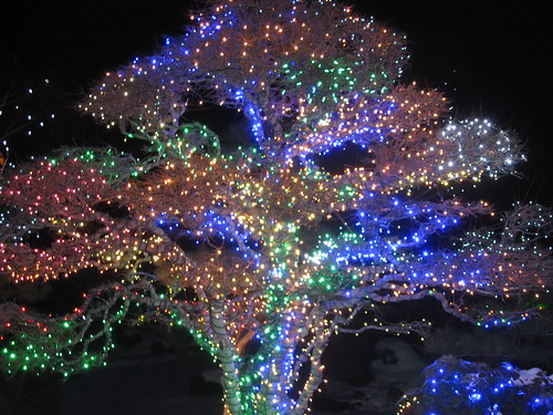 Christmas Lights At Denver Botanical Garden Michael Kanemoto Flickr