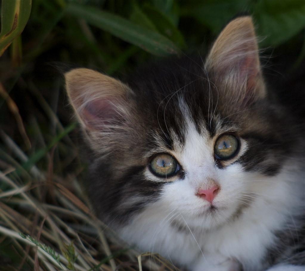 """The cutest kitten ever """"L"""" V¨da Papineau"""