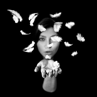 Plumes | by Benoit Courti