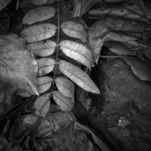 Novembers spine | by Colin Campbell (Bruiach)